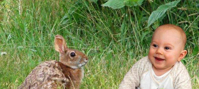 Cottontail-and-baby-1